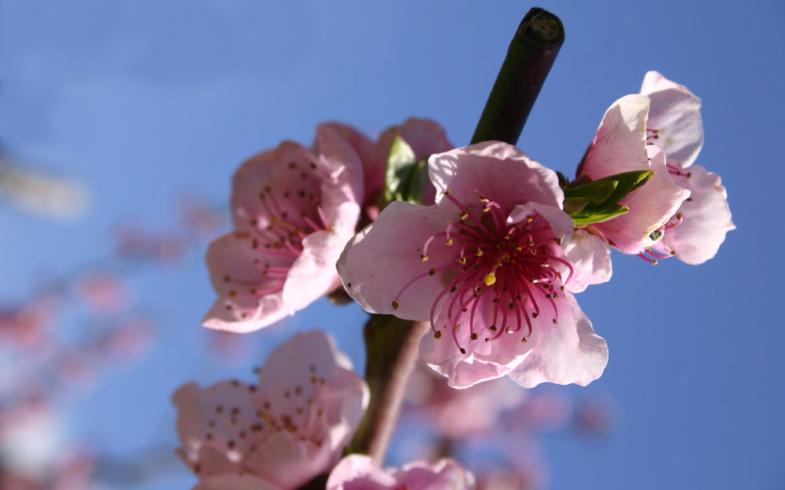 Oggi inizia la primavera!