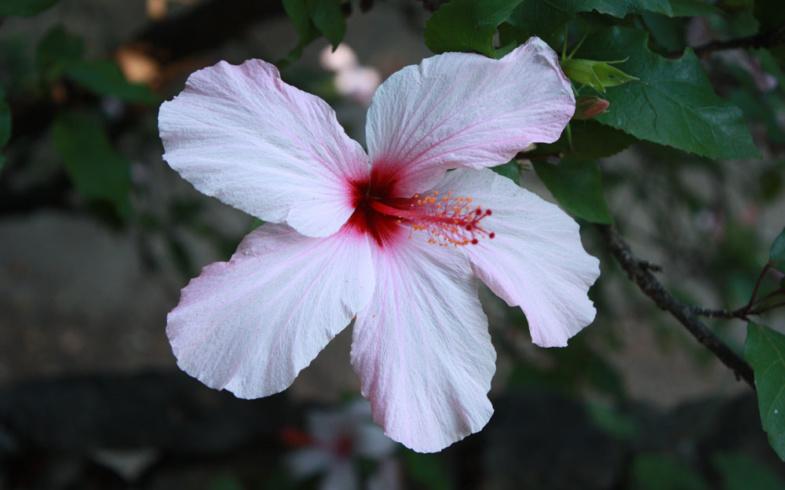 Arriva l'estate, come proteggere fiori e piante dal caldo