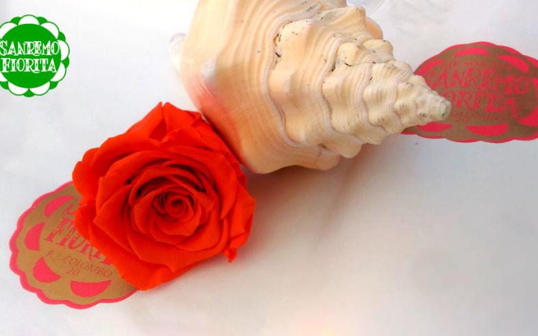 Una rosa che non muore mai!