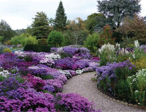 I fiori del mese di settembre gli astri sanremofiorita - Fiori di giardino foto ...